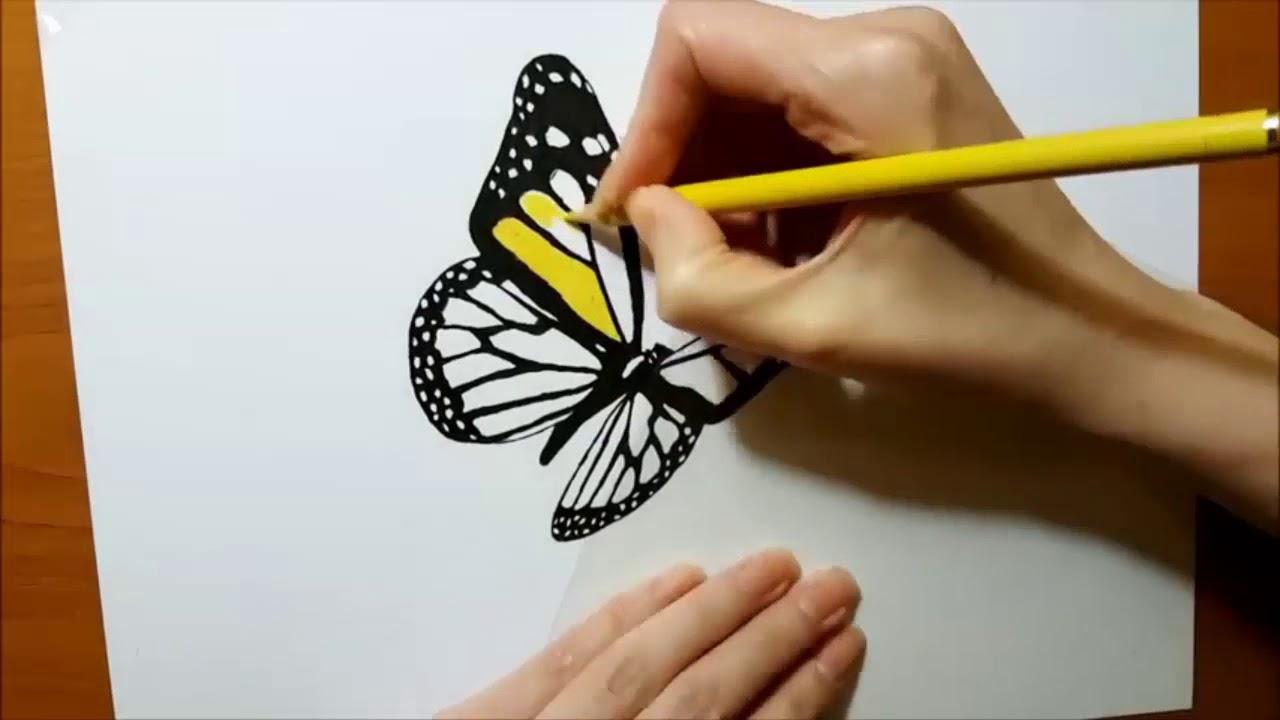 Primitive Technology Dibujo A Lápiz De Color De Mariposa Hunting