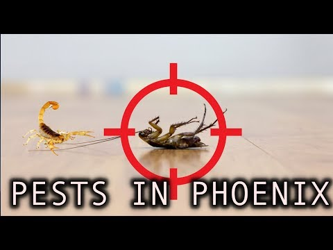 Pests in Phoenix Arizona Are a Problem