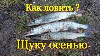 Рыбалка осенью на спиннинг! Щука клюет всегда на этот воблер!