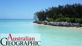 Heron Island: Hidden gem of the Great Barrier Reef