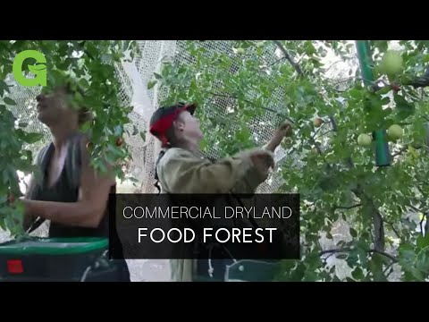 Commercial Dryland Food Forest