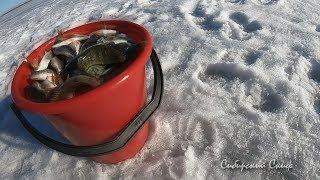 Мы Его Нашли Жор Окуня Подводная Съёмка Весенняя Рыбалка СибирскийСкиф