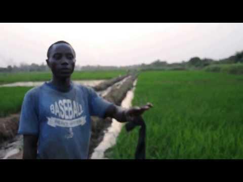 SRI farmer in Liberia
