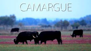 Camargue / tvlittoral
