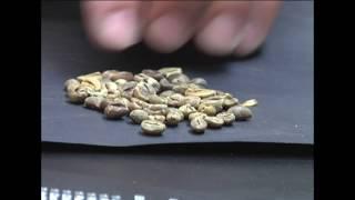 PGM8 Curso Classificação e Degustação de Café