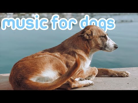 15-hours-of-relaxing-music-for-dogs-with-sleep-problems!-new-2019!