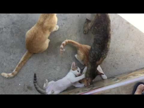 Cat lovers 2 - cute kittens playing