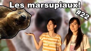 #22 Les marsupiaux - Le cabinet de K&K