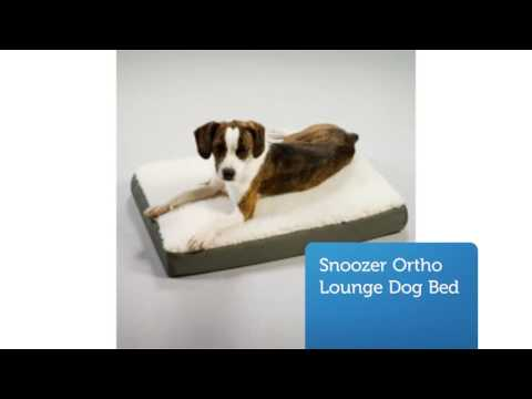 shop-large-orthopedic-dog-bed-:-precious-pets-paradise