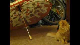 кот ест зонт