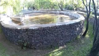 Кашалоты плавают в бассейне зоопарка
