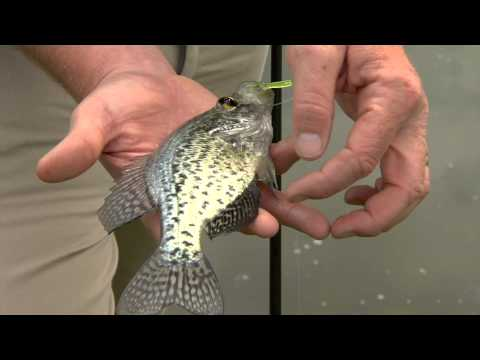 Fishing Basics: Handling Fish