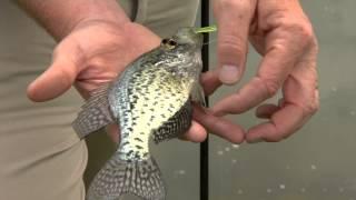 Fishing Basics: Handling Fish