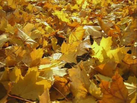 autumn leaves les feuilles mortes harmonica. Black Bedroom Furniture Sets. Home Design Ideas