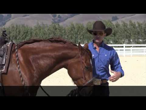 The difference between a hackamore and a rope halter ( or sidepull )