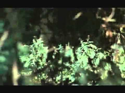 Phim video clip she devils of the ss 1973 1080p - Diva futura l avventura dell amore ...