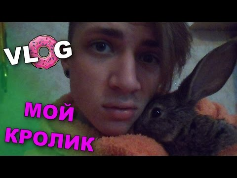 VLOG: Мой кролик / Андрей Мартыненко