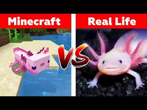 MINECRAFT AXOLOTL IN REAL LIFE! Minecraft Vs Real Life Animation