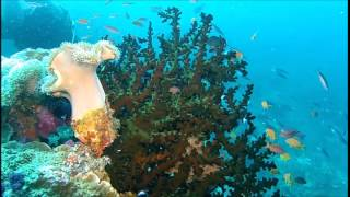 Diving Fiji - Pure Magic   20150305