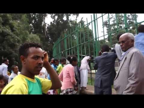 Addis Lion Zoo