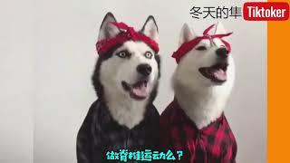 new funny animal videos July 2019 老鼠闆上粘狗頭
