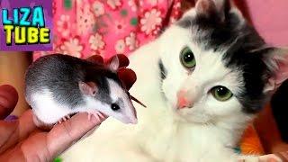 Реакция КОТА 😱 Кот и Крыса подружатся ? Лиза и питомцы