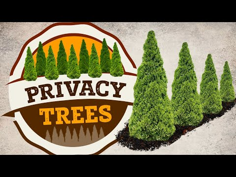 Privacy Trees | Fast Growing Privacy Trees | PlantingTree™