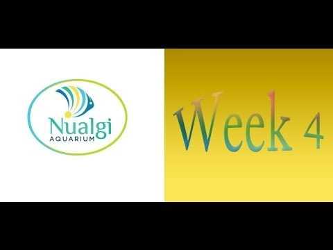 Nualgi Dosing Week 4 (Day 25 and 29) ~ Amber's Aquariums