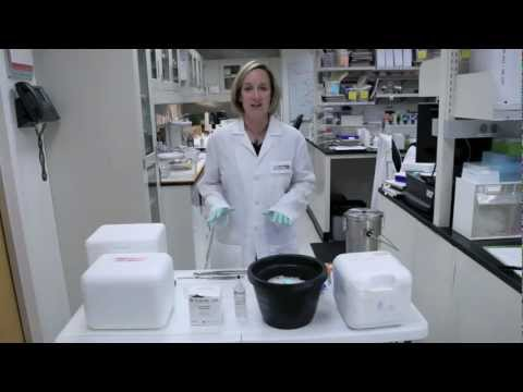 Cryo Preservation Techniques