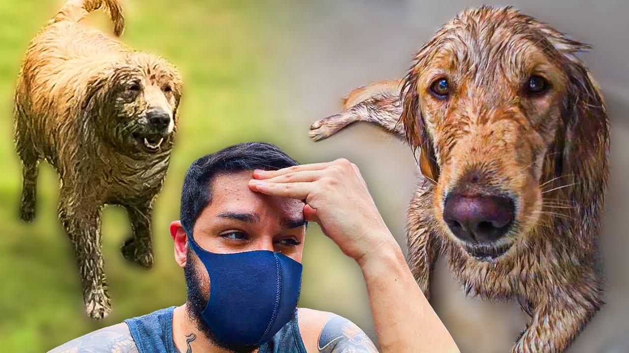 Nossos cachorros ENTRARAM NA LAMA sem a gente saber!