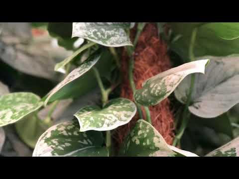 5 Extremt tåliga krukväxter för skuggigare lägen