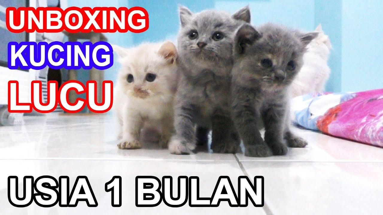 UNBOXING KUCING LUCU USIA 1 BULAN ANAK JHONY