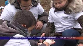 Yvelines | Le département donne un coup de pouce pour reboiser la forêt Sainte-Apolline à Plaisir