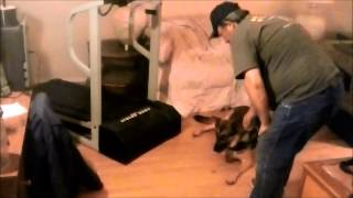 Ptsd Service Dog - Task Related Training