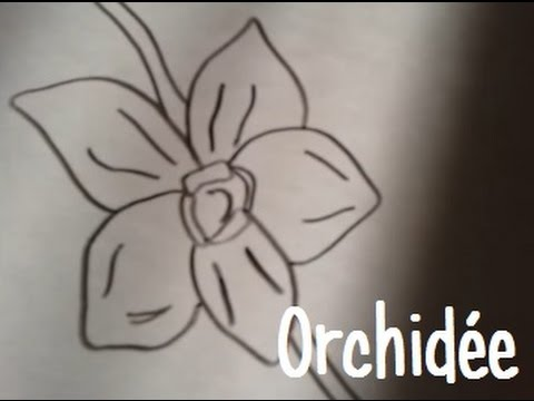 Dessiner une orchidee youtube - Dessin orchidee a imprimer ...