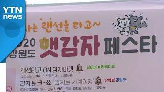 강원도, 오늘부터 이틀간 서울서 햇감자 특판 행사 / …