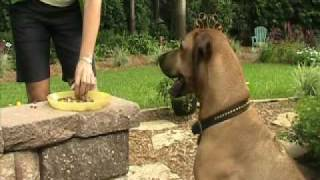 Teach Your Dog To Come (recall Training) - Dog Training In Jacksonville, Fl