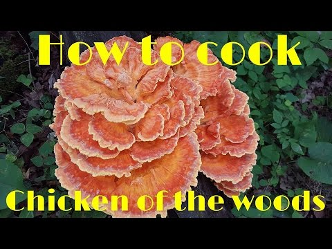 How to cook Chicken of the Woods Mushrooms - YouTube