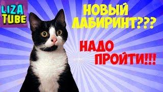 Лабиринт #4 для кошек 😺 Кот Компот проходит новый лабиринт 😂 \ LizaTube