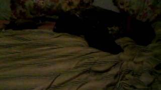emily-and-coco-laying-on-the-bed