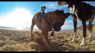 GoPro Fetch mount Review: Dog Harness for Gopro Camera