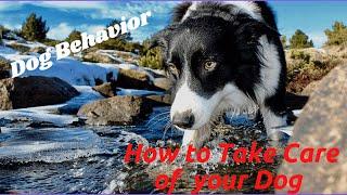 Dog Care and Training Fundamentals