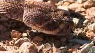 Sonoran Desert Wildlife