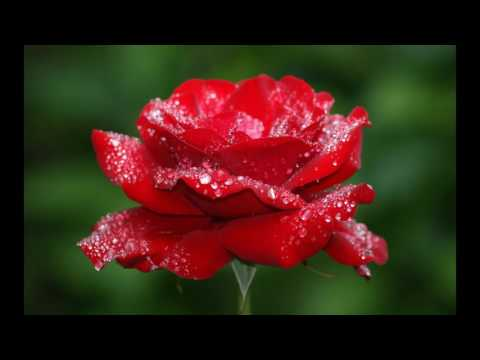 symbol of love flowers images