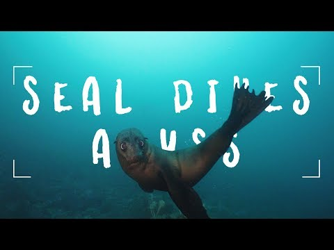 Seal Dives At Martin Island