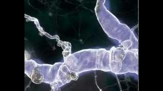 The Dancing Neuron.mov
