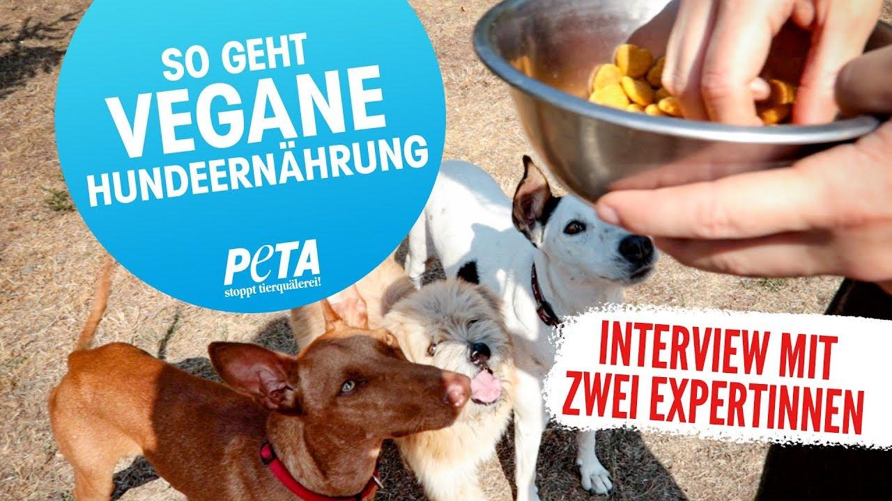 Hunde vegan ernähren   Wie artgerecht ist das • CareElite