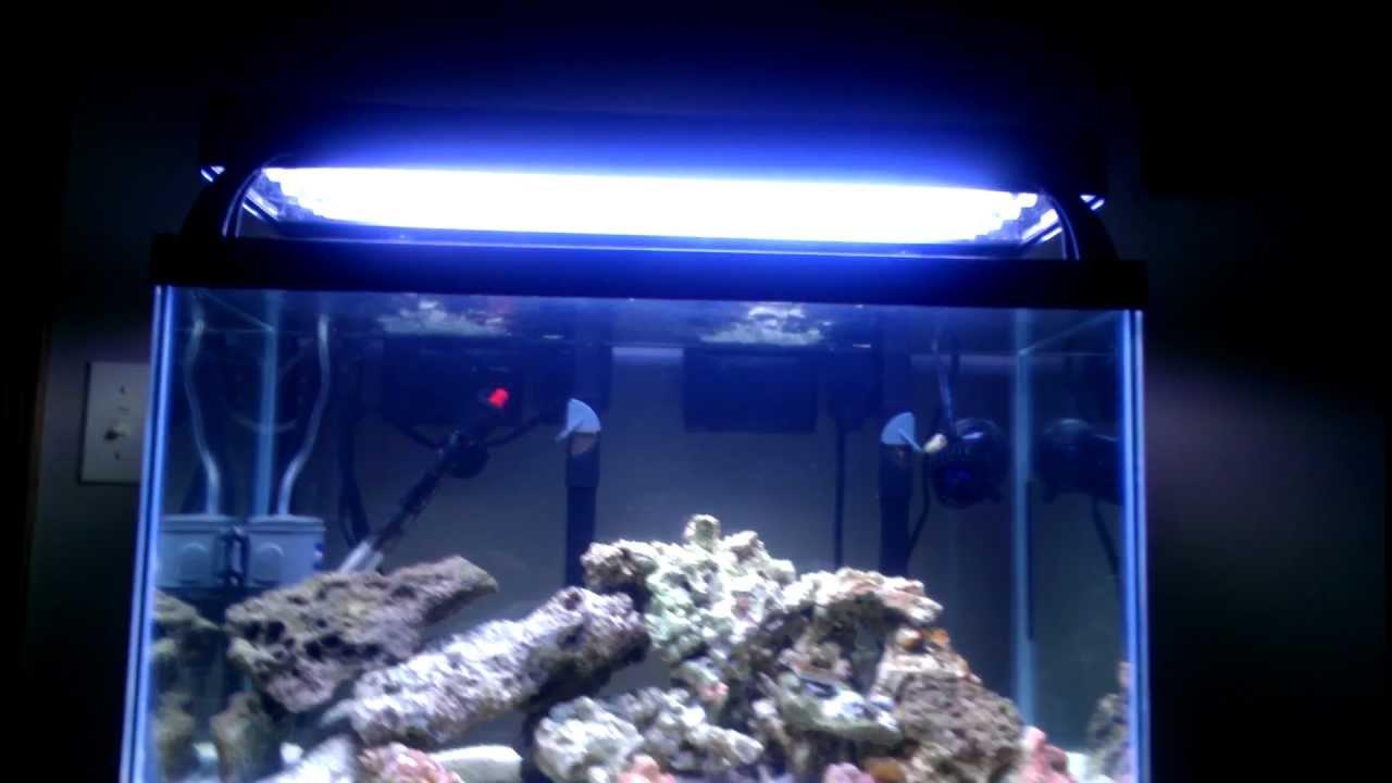 coralife lunar aqualight review