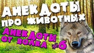 Анекдоты про животных. Анекдоты от Волка #6