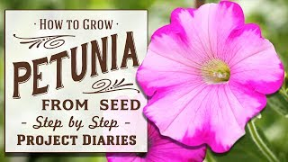 ★ How to: Grow Petunia from Seed in Containers (A Complete Step by Step Guide)